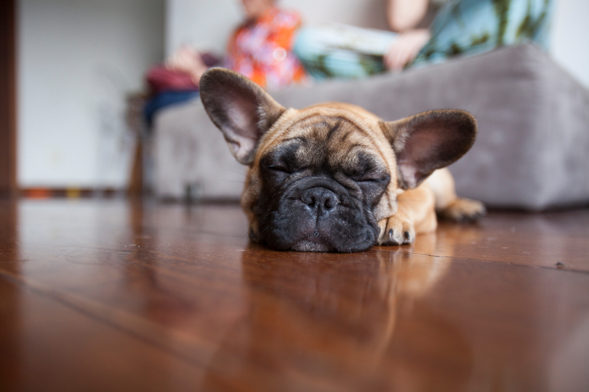 selling a home where pets live - the right wans